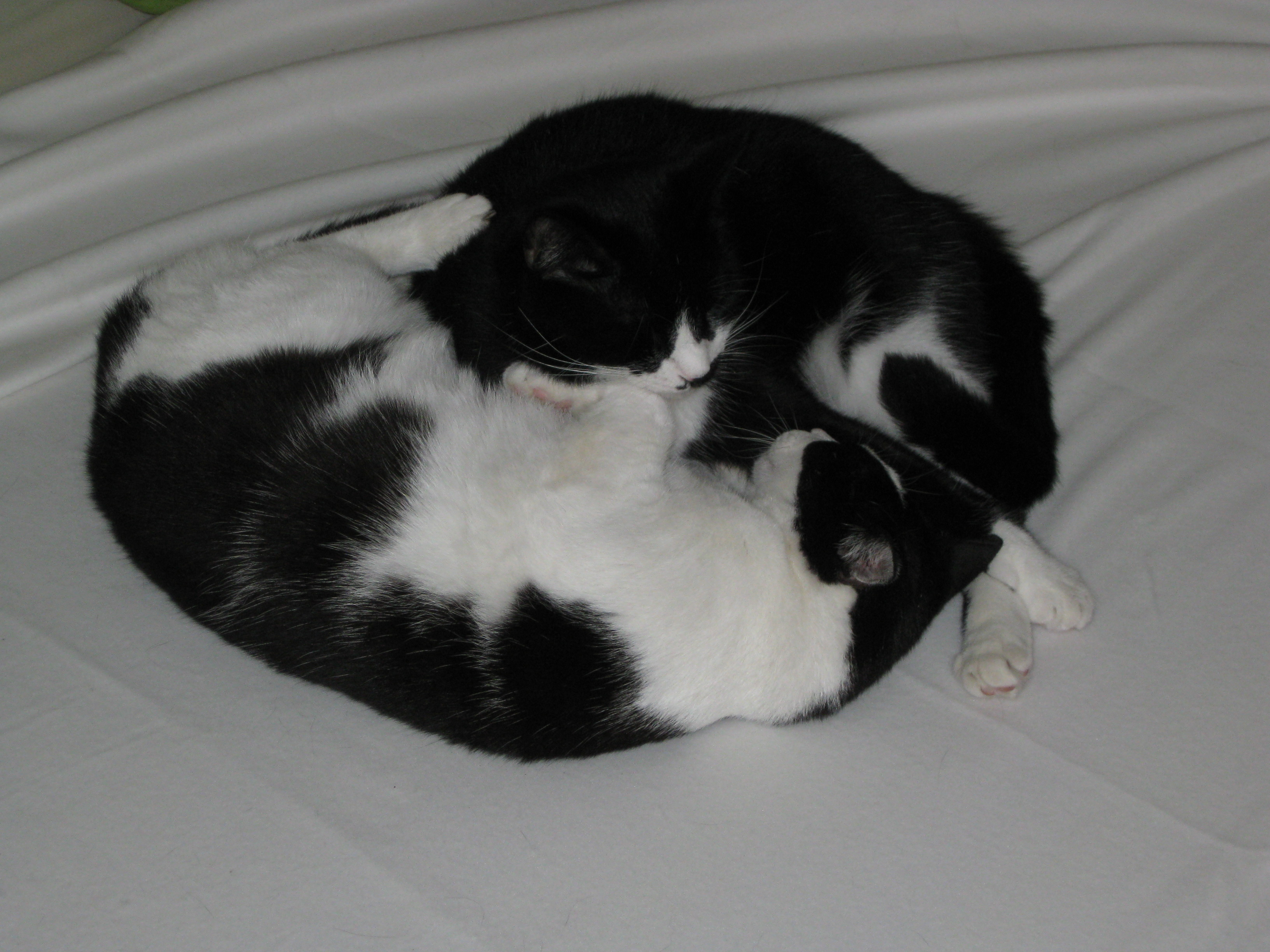 yin und yang bedeutung welche rolle spielt die yin yang. Black Bedroom Furniture Sets. Home Design Ideas